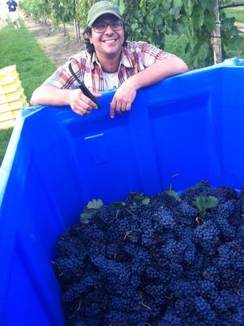 Joel, Messina Hof, July 2012, grapes