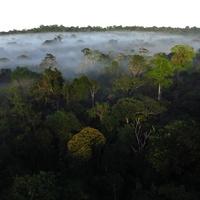 Stephen Lorenz Southern Amazon Brazil September 2013 Beautiful rainforest as far as the eye can see
