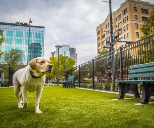 SkyHouse Houston dog park