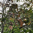 News_dying tree_branches_leaves