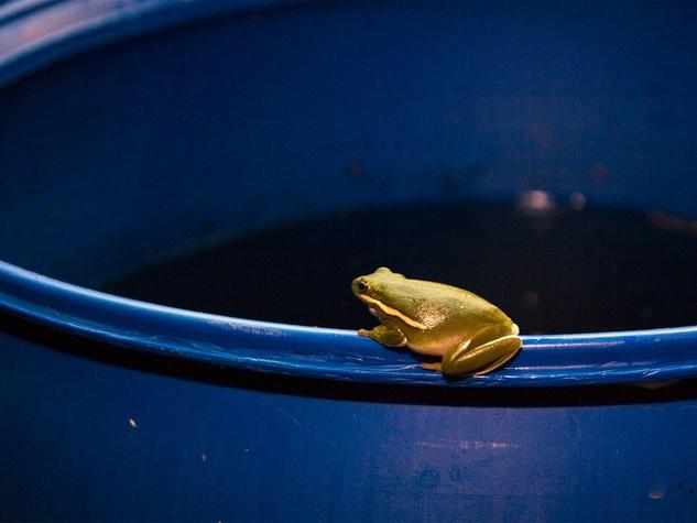 Photo of frog on rain barrel