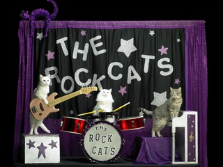 Tuna and the Rock-cats_Amazing Acro-cats_Samantha Martin_2014