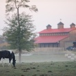 Timber Creek Ranch horse in front of barn