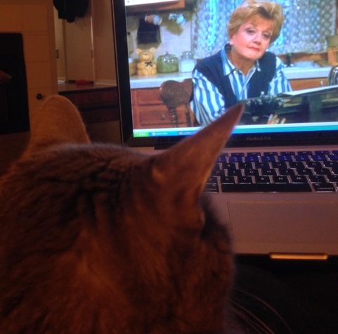 Austin Pets Alive! Angel the senior cat watching Murder She Wrote