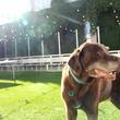 Parlor & Yard bar Dunlap ATX west sixth February 2016 outdoor patio dog