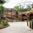 News_Houston Zoo_cougar den