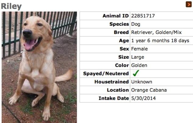 Humane Society dog