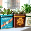 Succulents from Flower Child Plants
