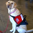 Patriot Paws in Rockport, Texas