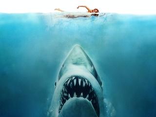 News_fav sharks_Jaws