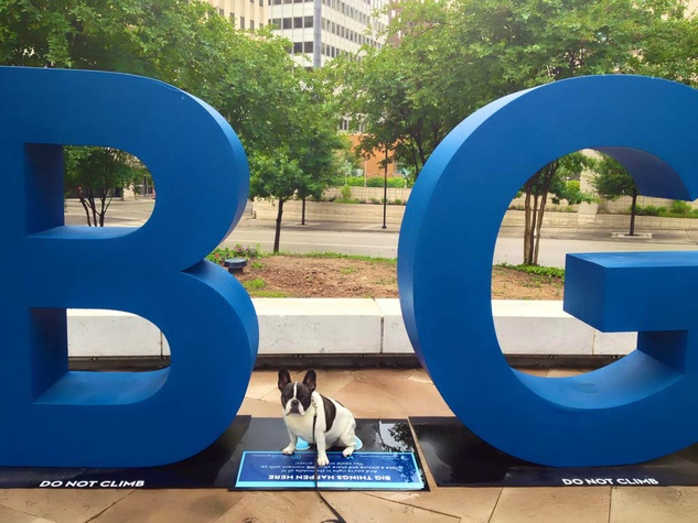 Monty the French bulldog at the BIG sign