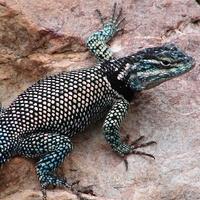 Stephan, southeast Arizona, November 2012, local critters