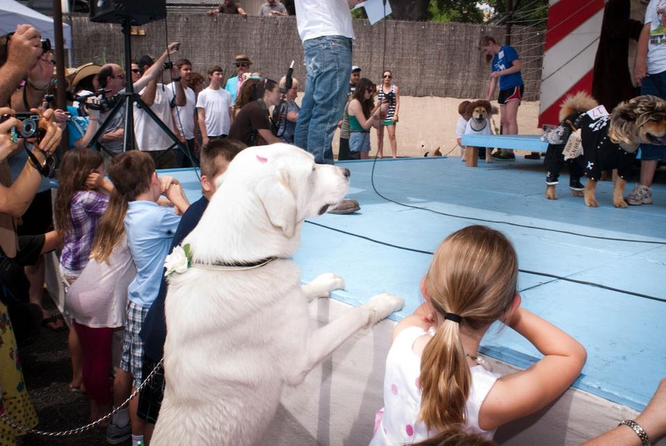 Austin Photo Set: News_Easter dog parade_april 2012_16