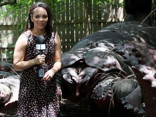 Nicole Hickl Extreme Bugs Houston Zoo