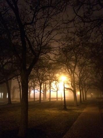 fog in Houston February 2014 Rice University quad