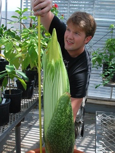 News_Zac Stayton_corpse flower_July 10