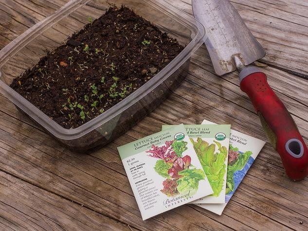 Salad greens seed packs