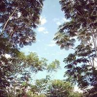 rainforest canopy for the Rainforest Partnership nonprofit