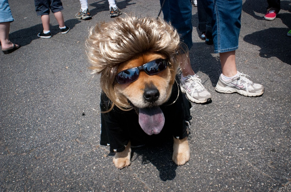 Austin Photo Set: News_Easter dog parade_april 2012_7