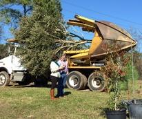 Apache tree planting, Memorial Park, Jan. 2016, Apache Grove
