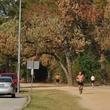 News_Memorial Park_dead trees_joggers