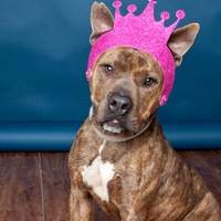 Picture this Pet - Austin Pets Alive - Baby 1 - March 2015