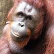 Houston Zoo exhibit paintings by elephants and orangutans April 2014 Kelly