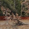News_Memorial Park_dead trees_field