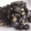 El Big Bad Huitlacoche freshest corn smut from Flordia prepared with proprietary method to innoculate and cultivate it