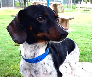 Houston, Pethouse pet of the week, June 2014, marty