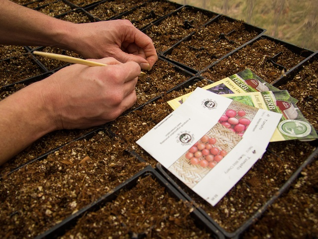close up of hands planting seed