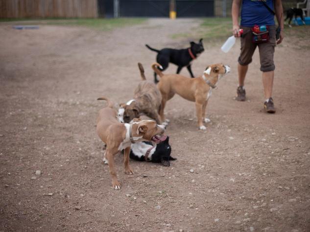 Austin Photo Set: News_caitlin_austin pets alive_feb 2013_2