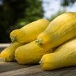 Photo of yellow squash