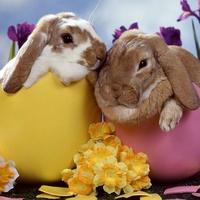 News_Easter eggs_bunny