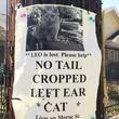 Montrose missing cat poster