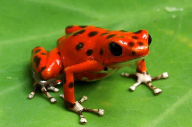 Frog chameleon lecture