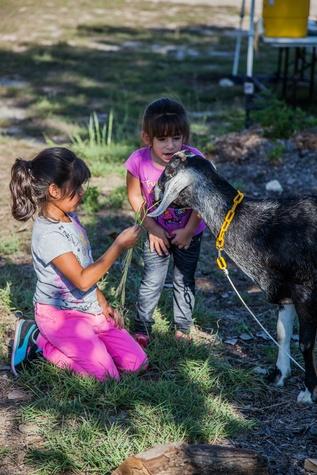 SFC_Kids_Goat