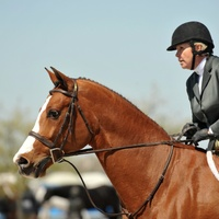 "69th Pin Oak Charity Horse Show: ""$30,000 Pin Oak Charity Horse Show Walter Oil and Gas Grand Prix and Gala Reception, Week II"""
