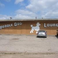Austin Photo Set: Places_poodle dog lounge