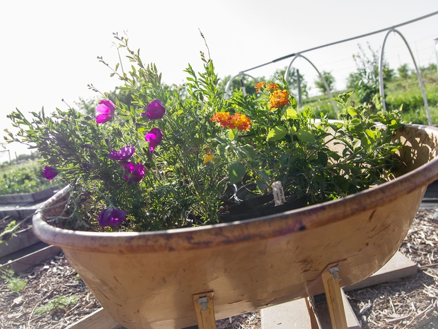Photo of assortment of native Texas perennials