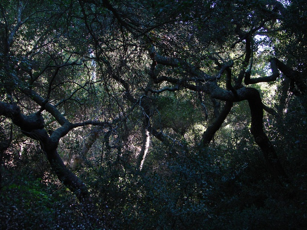 Stephan Lorenz Channel Islands January 2014 Woodland in canyons provides welcome shade during the summer months on the Channel Islands