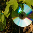Photo of CDs hanging on vines