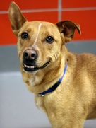 Wyoming shelter dog at SPCA