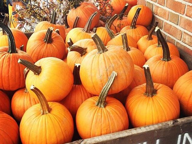 pumpkins September 2013 HORIZONTAL