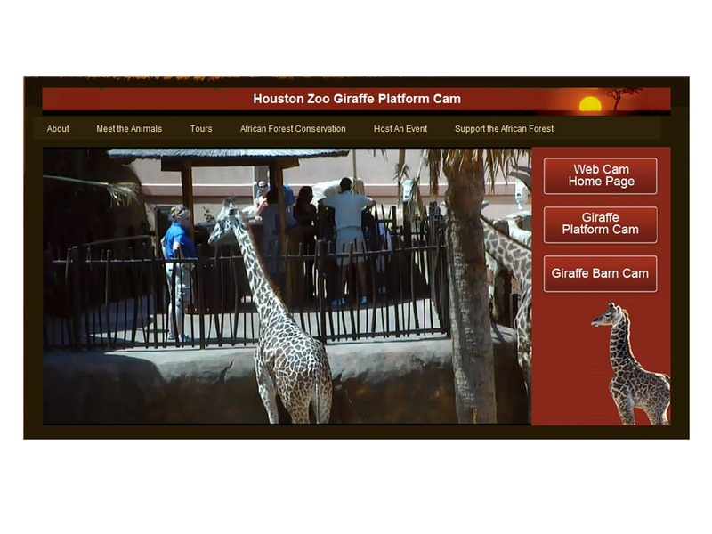 News_Houston Zoo_giraffe cam