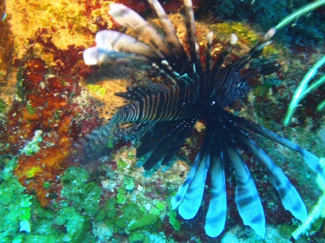 Food_and_Drink_Lionfish_Reef_Sept_2013
