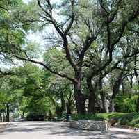 News_oaks_oak trees_street