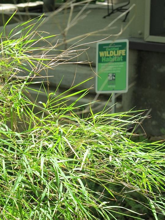 News_Katie_Patsy Cravens_Patsy's yard - Certified Wildlife Habitat