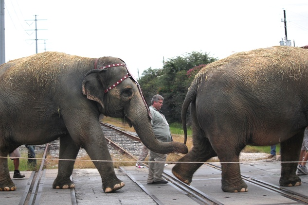 Ringling Bros. Circus, Holding tails, July 2012