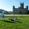 Highclere Castle with horse, dogs, day